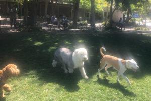 dog park